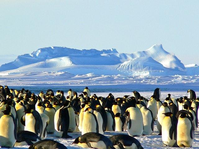 Находка в Антарктиде, которая поразила весь мир!