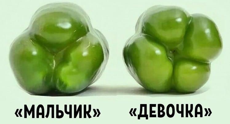 """Выбираем правильно болгарский перец: """"девочки"""" - для салатов, """"мальчики"""" - для консервирования."""