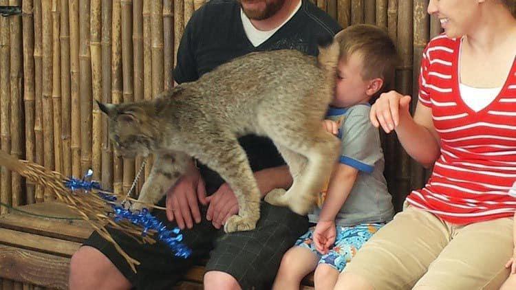 Посещение зоопарка запомнится на всю жизнь. И смех, и грех!