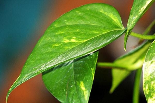 Обычные спички помогут оживить растения!