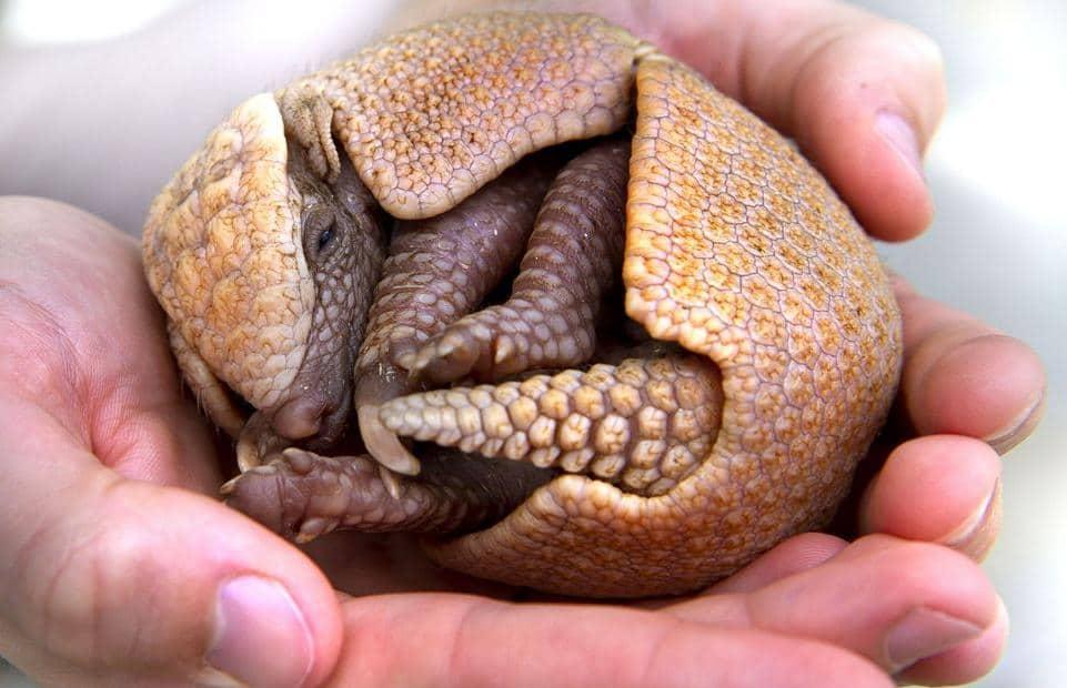 20 фото новорожденных животных. Вы вряд ли их видели раньше!
