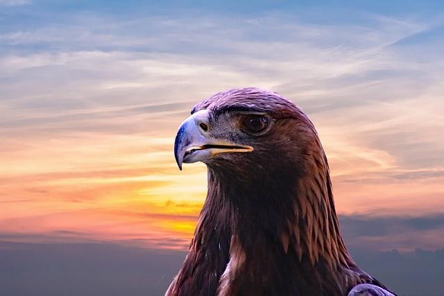 Орел, доживая до старости, делает изумительную вещь.
