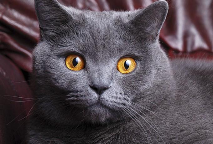 Все ли благополучно в Вашей жизни? Об этом расскажет кошка!
