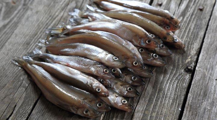 Что берет с собой на рыбалку опытный мужик?