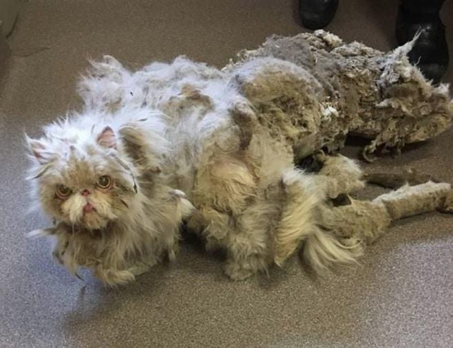 Это несчастное животное вызывало жалость! Но стоило ему сбрить шерсть…