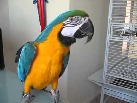 Объявление о продаже попугая которое вам запомнится надолго!!!