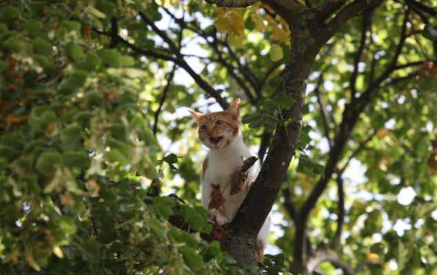 Как МЧС рационализировали спасения кота, который 2 дня просидел на дереве!