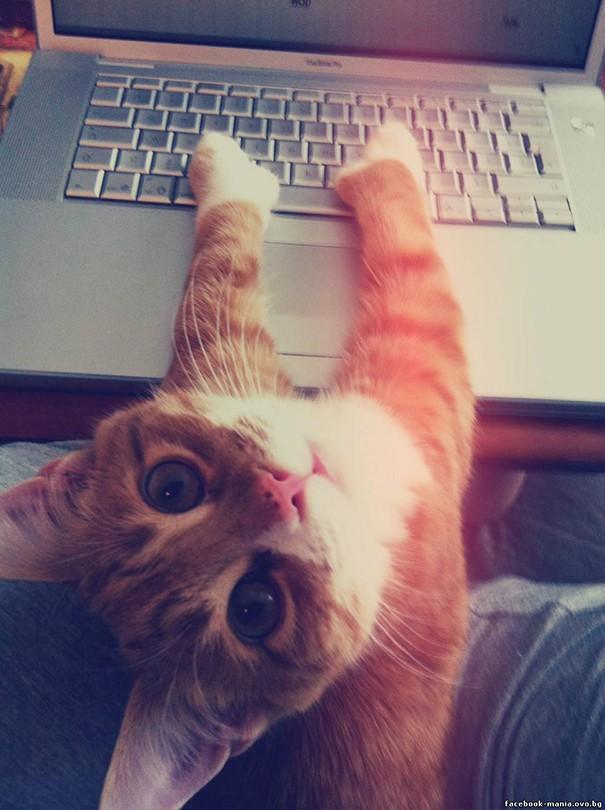 15 фото котов, которые не считаются со своими хозяевами!