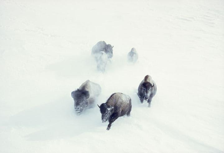 25 фотографий National Geographic, которые так и не были показаны зрителю!