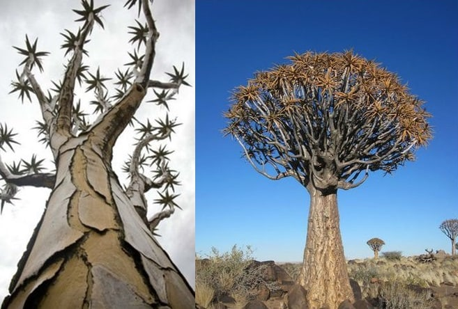 Самые невероятные деревья планеты! Мир полон чудес!