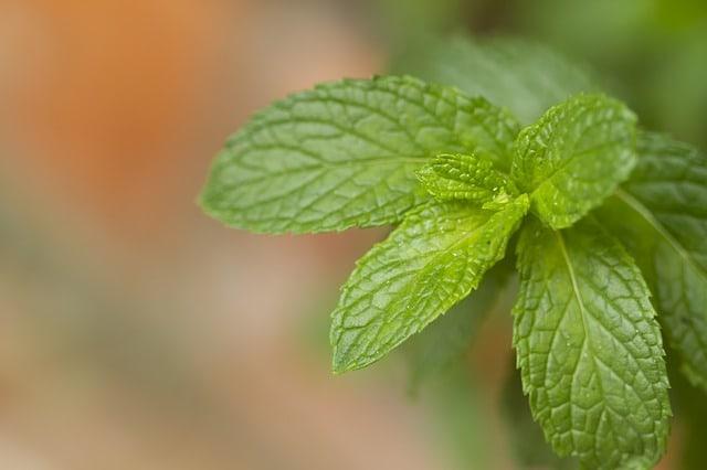 5 запахов, которые исцеляют. Ученые доказали!