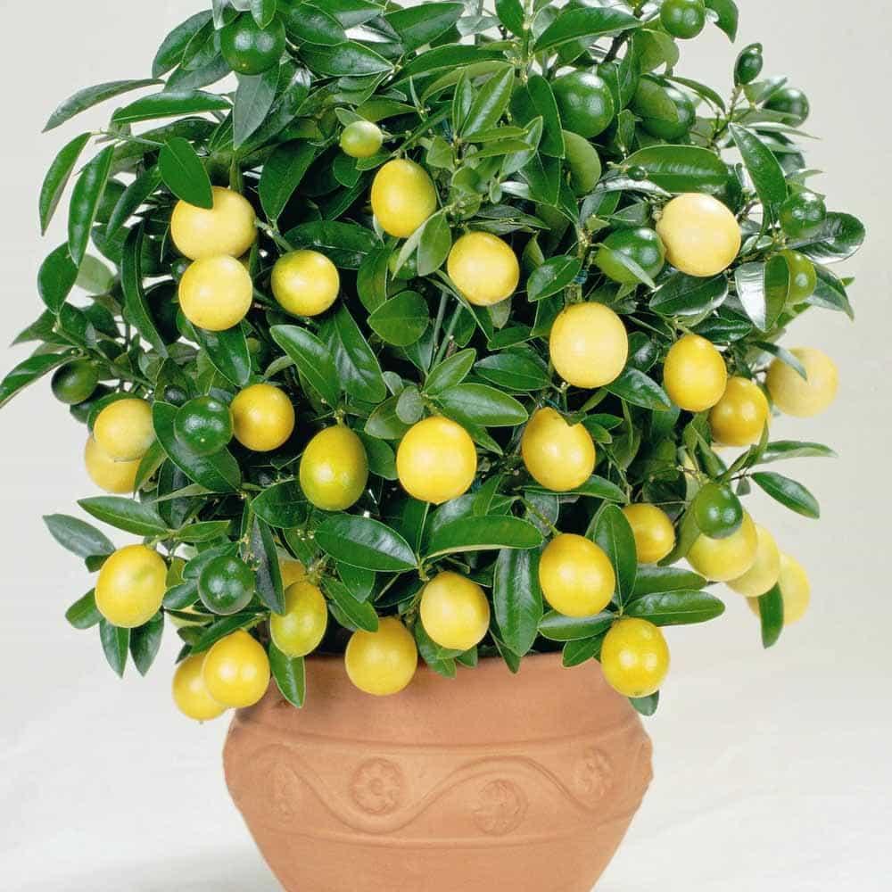 Верните жизненные силы, поселите в комнате одно из этих 8 растений!