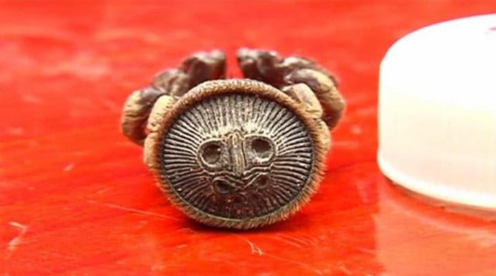 Паук-песочные часы: насекомое встречается так редко, что о нем почти ничего неизвестно!