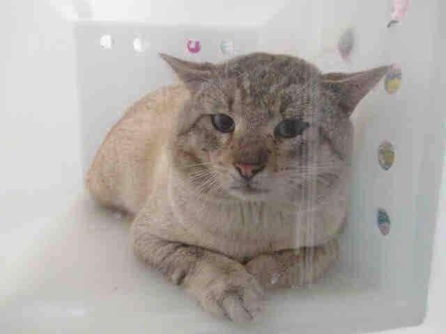 Его хотели усыпить, но судьба распорядилась иначе. Кот впервые в жизни смог полюбить.