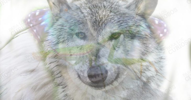 Правдивый тест: какое животное Вы первым увидели?