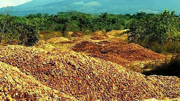 Экологи выбросили тонны кожуры апельсин. Через 16 лет увидели результат эксперемента!