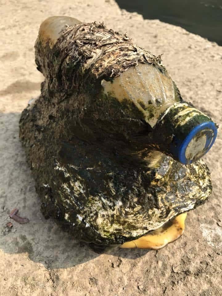 В воде быстро плыла бутылка. Но когда рыбак присмотрелся, то уведенное вызвало ужас и возмущение!