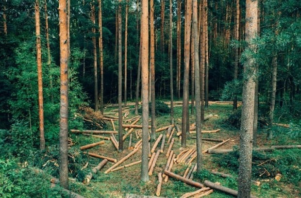 Норвегия - первая страна мира, которая отказалась от вырубки леса!