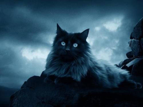 Кошки чувствуют негатив. Как животное сообщает об этом?