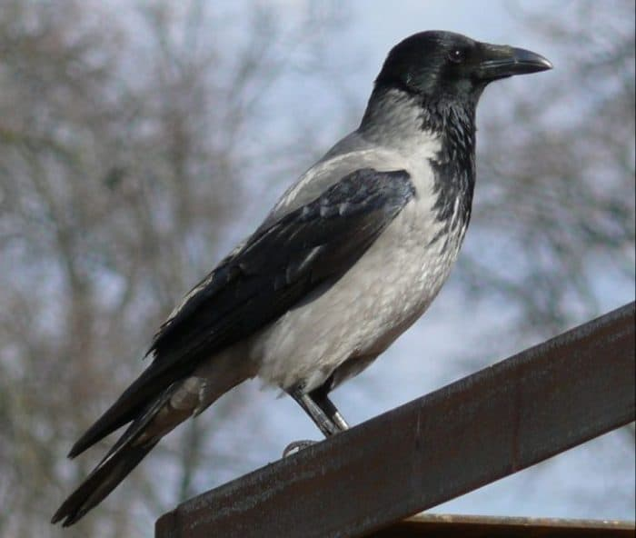 5 самых опасных птиц на планете. Держитесь от них подальше!