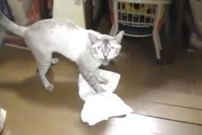 Кот умеет мыть пол. Веселый ролик о пушистом помощнике.