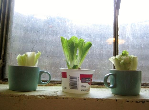 Советы для тех, кто хочет сделать мини-огород дома.