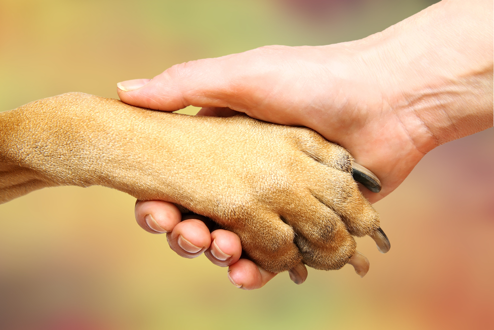 С одними собака дружит, а на других - лает. А вы знаете почему?