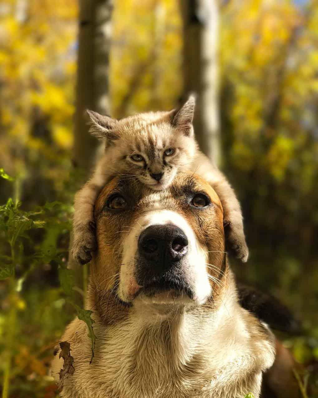 За плечами этого пса и кота месяцы путешествий и сотни прекрасных снимков!