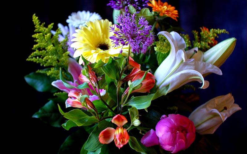 Какой твой цветок согласно месяцу рождения! Узнай о себе чуть больше!