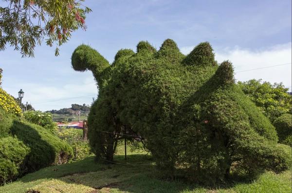 Эти мистические сады Коста-Рики мечтает увидеть каждый путешественник!