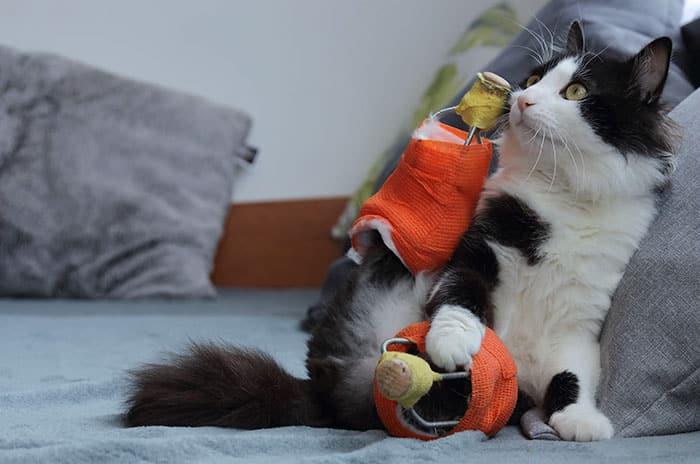 Кот научился жить полноценной жизнью даже без ног.