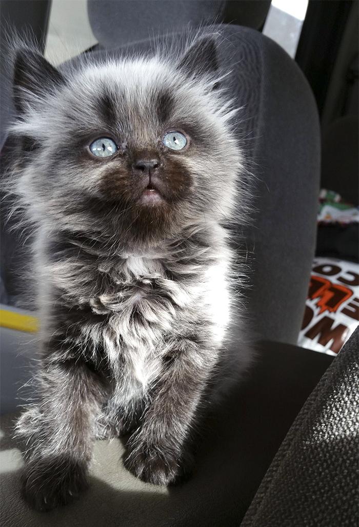 20 классных кадров из жизни людей которые раньше не выносили кошек!
