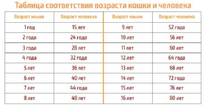 Сколько лет вашему питомцу в переводе на возраст человека!