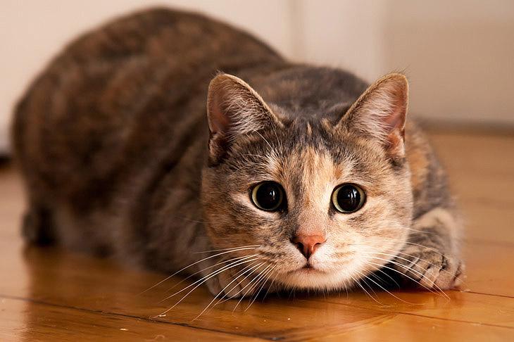 10 правил для владельцев кошек!