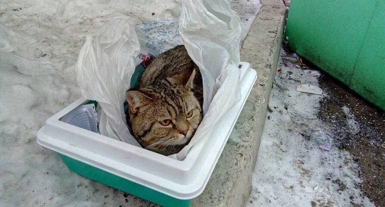 Под Новый год Лёву выставили на улицу. Кот оказался ненужным!