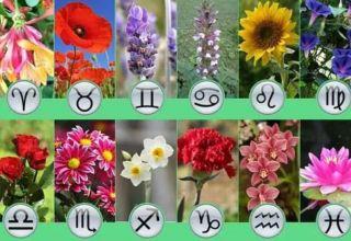 Цветок по знаку Зодиака!