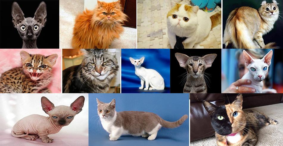 Выбирай кота, это подскажет нам твой знак Зодиака.