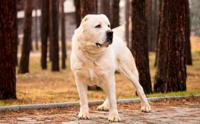 На какую собаку вы похожи согласно знаку Зодиака?