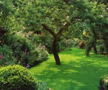 Какой кустарник выбрать для своего участка?
