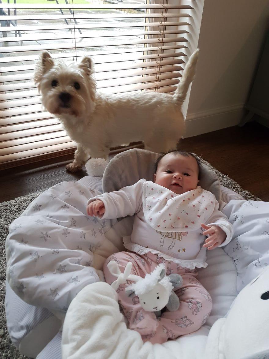 Идея на миллион: как поступить с собакой, если в семье вот-вот появится ребенок?