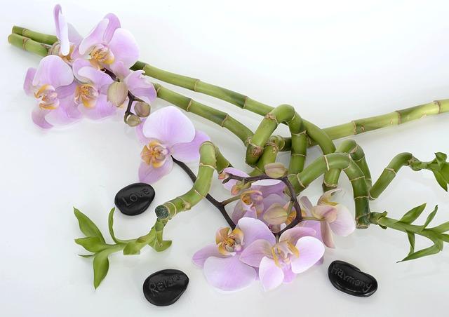 Как одну орхидею превратить в сотню растений?