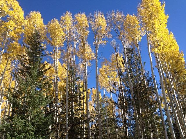 Как деревья влияют на энергетику человека?