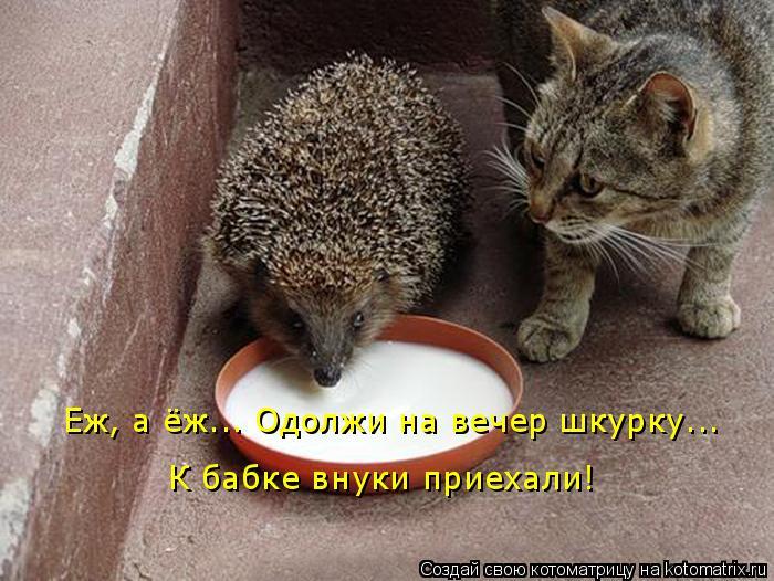 http://lifeinkaif.ru/wp-content/uploads/2016/09/podelis-shkurkoj.jpg