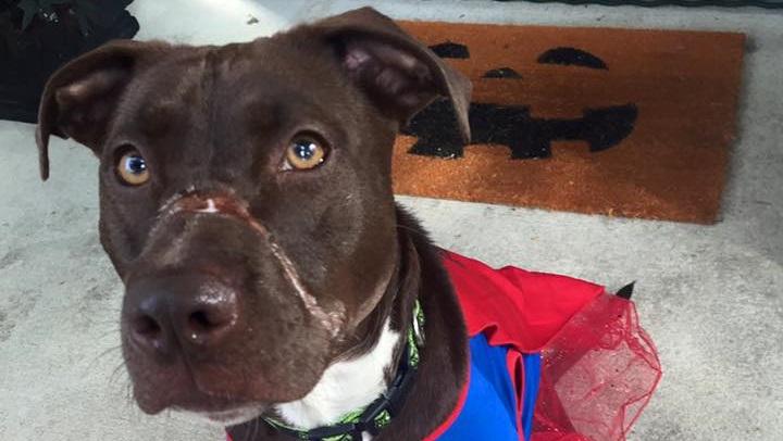 Садиста, искалечившего собаку по кличке Кейтлин, приговорили к 15 годам тюрьмы!