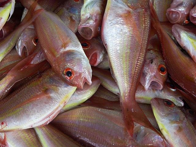 Хорошая новость для покупателей заключается в современных быстроходных судах, которыми транспортируют рыбу. Именно благодаря быстроходным судам перед покупателями открывается такое разнообразие свежей рыбы, хотя местная рыба все-таки предпочтительней по свежести. Следует помнить, что не вся рыба подходит для употребления. В жирной рыбе, такой как лосось, голубая рыба, тунец, кефаль и скумбрия более высокое содержание жирных кислот омега-3 и других антиоксидантов, чем в некоторых из их водных соседей.