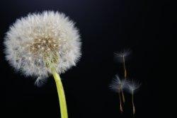 3 эффективных совета, как уменьшить аллергию на 50 процентов!